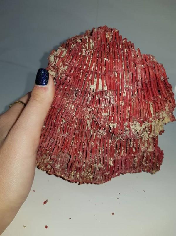 קורל סלע טבעי איכותי גוון אדום משקל: 425 גרם